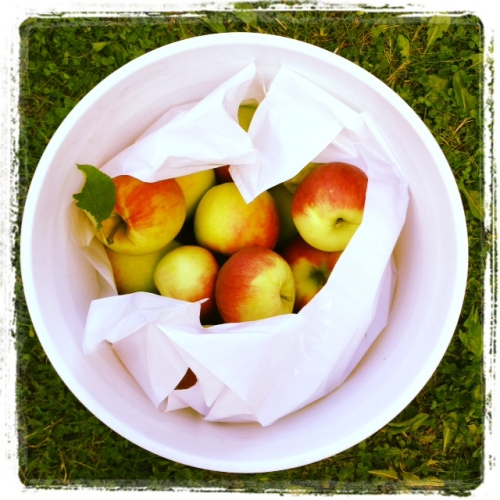 A bounty of apples.