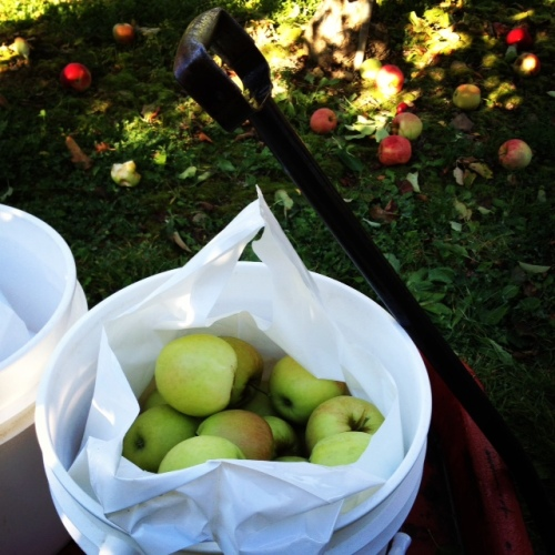 apples9
